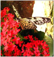Butterfly World 2 by jewelslove
