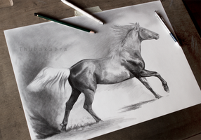 Horse drawing work in progress by Thubakabra