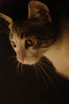minino oscuridad by emilie-cat