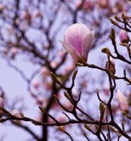 Magnolia series I by Bozack