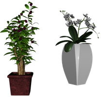 Plants stock pack 05 by Ecathe