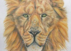 Lion Portrait by Tawned