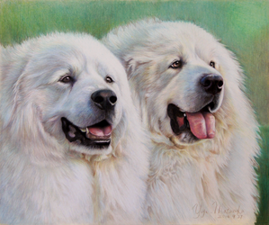 Pyrenees dogs 6 by Booze528