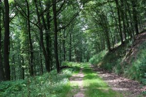 Palatinate Forest Stock 13 by Malleni-Stock