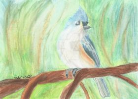 Watercolour pencil little bird by Isabelproffitart