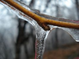 close up on an icicle by pungen