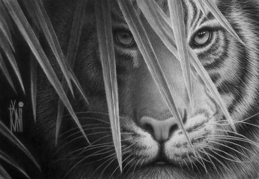 Indonesian tiger by toniart57