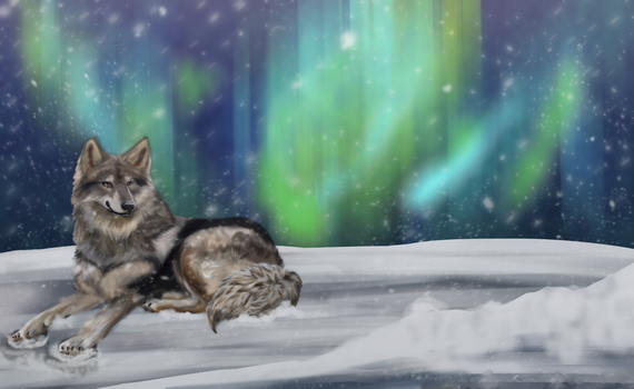 Native American Indian Dog *video draw* by Ingrissi