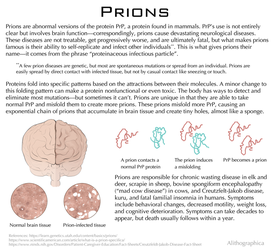 Science Fact Friday: Prions by Alithographica