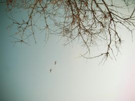 fly away from here.. by samiliam