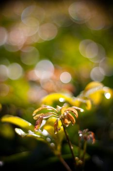 morning dew by Shutong