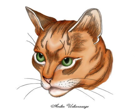 The Feline Face by Ambsu