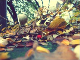 autumn at ground level by LittleTear