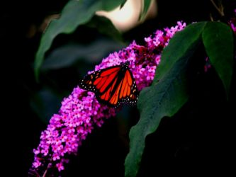 Zoo Trip Butterfly 3 by the-astronaut