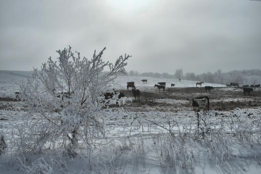 Cold Cows, Horses, Hoarfrost by Anachronist84
