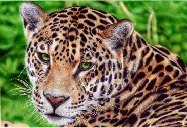 Jaguar - Ballpoint Pen by VianaArts