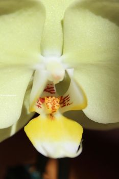 Beautiful Orchid by FrozenNature
