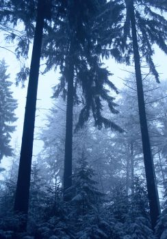 the cold cold forest of loneliness by MimusVitae