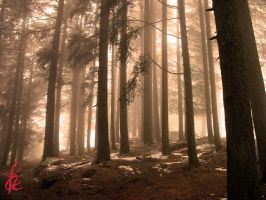 Scary forest by faizan47