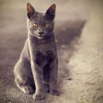 Little Sphinx by Eibography