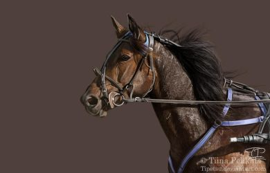 Trotter by Tipetsu