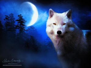 Wolf painting by artistamroashry