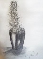Cactus of mine. by Smooth-Annie
