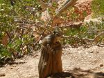 Chipmunk in Bryce Canyon by MTGEmperor