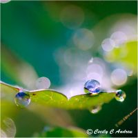 Morning Water Drops by CecilyAndreuArtwork