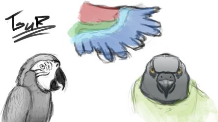 Animal sketches #1 - Parrot by TsuRIL