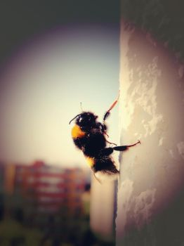 Bumble-bee by Kattelin696