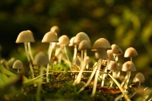 Fungus Forest by migiel11