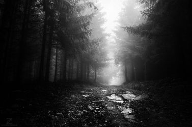 If These Trees Could Talk pt.XII. (BW) by realityDream