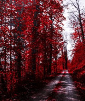Bloodred Forest VI by Aenea-Jones
