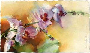 Home muse. Orchid by OlgaSternik