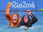 21 - Apes - Synchronized Swimming by Ghostexorcist