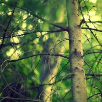 Forest Bokeh by Sortvind