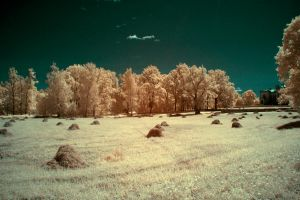 City park IR by puu4ux