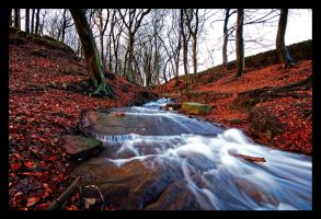 Buckden Woods by jonathanknowles