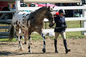 Appaloosa 3 by HTRayzee