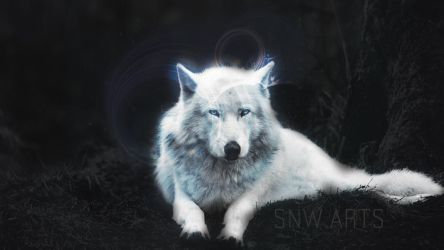 Wolf by theollin