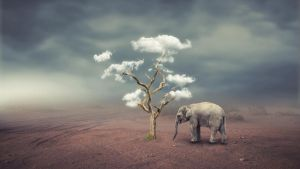 Save Nature Photo Manipulation by DesignArtStudio