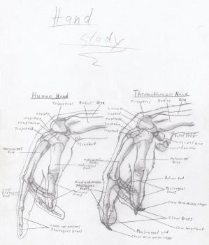 Wolf Anthro Hand Study by RussellTuller
