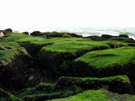 Moss Covered Rocks 4 by FairieGoodMother