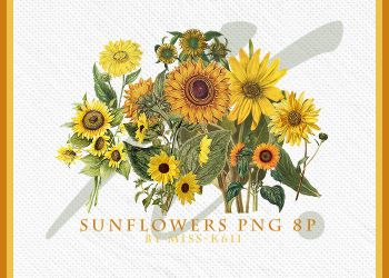 Sunflowers Png by MISS-K611