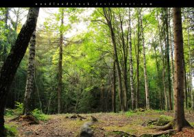 forest 002 by woodlandSTOCK