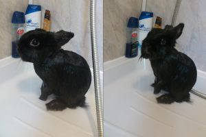 Sasuke Bunny - Shower Time Saga - 2 by SugarDropSparkle