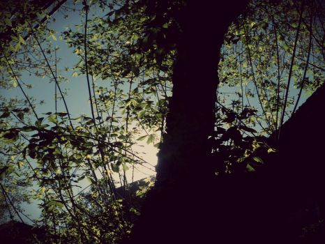 Trees and sun by lunadeinviern0