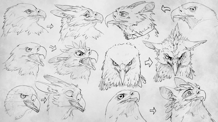 Turning birds into gryphons p2 (practice) by Rastaban26