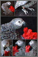Basil The african grey by mangakasan